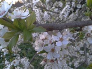 primavera al parco