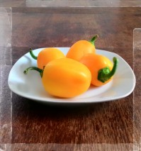 "peperoni gialli varietà ""Topepo"""